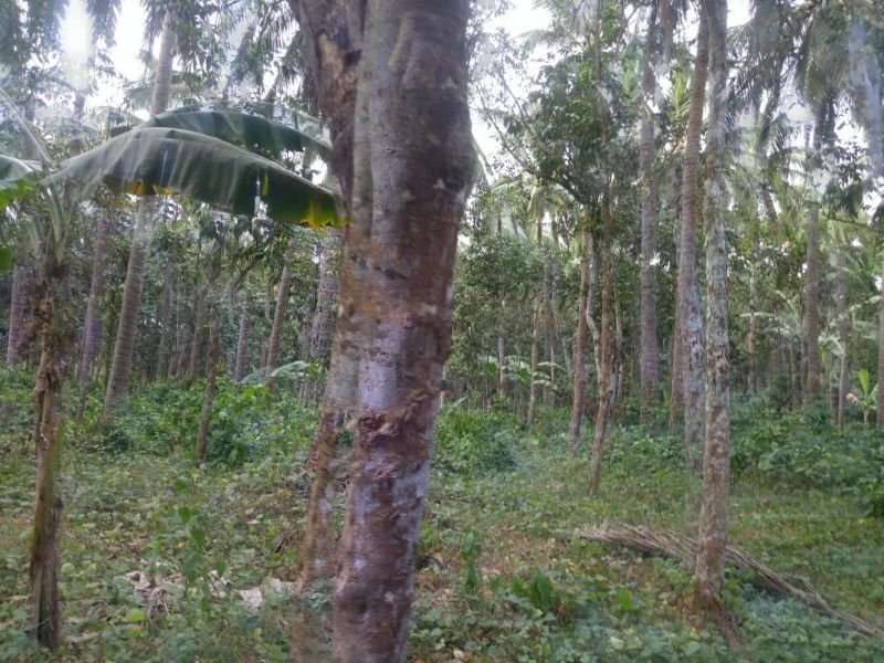 farm lot for sale-19has-p250 per sqm with thousands fruit bearing trees
