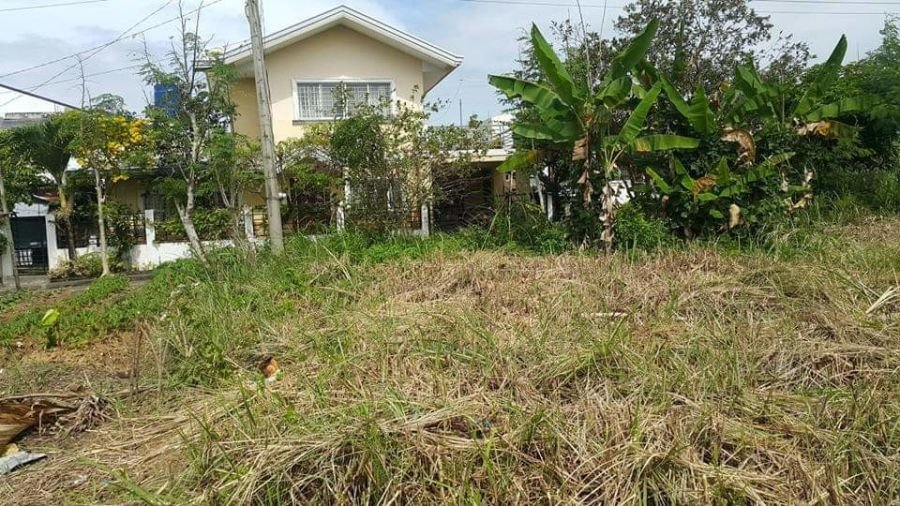 land for sale in manapla, negros occidental