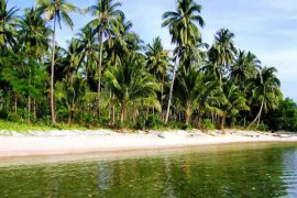 Land for sale in Palawan