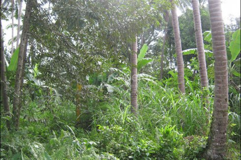 Land for sale in Bongbong, Negros Oriental